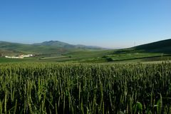 Green Wheat with mountains and blue sky. On the road of morocco. wide wheat under blue sky and far mountain Royalty Free Stock Photos