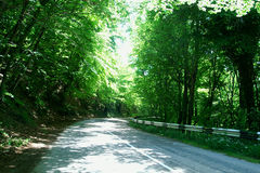 A road is in the mountain forest Stock Photo