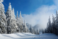 Road in mountain full of snow with firs Royalty Free Stock Images