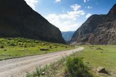 Road in a mountain gorge in the summer. Republic altai Royalty Free Stock Image