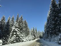 Winter road in a mountain. A road in mountain winter, through middle of the forest stock photo