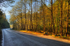 Road through mountainous forest Stock Images