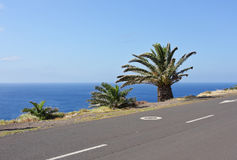 Road in the mountains. In Madeira Stock Photo