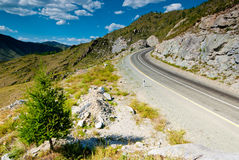 The road in the mountains. Altai Mountains Royalty Free Stock Photo