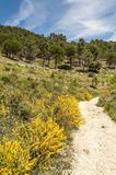 Road in the mountains of Cadiz Royalty Free Stock Photos