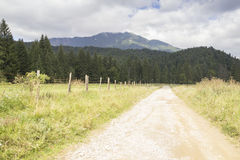 Road in the mountains. Country road in carpathian mountains Stock Photo