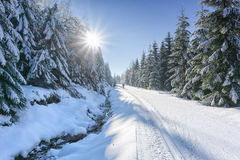 Road in mountains with groomed ski trail and stream beside. At winter in sunny day. Trees covered with hoarfrost and fresh snow illuminated by the sun. Jizera Royalty Free Stock Photos