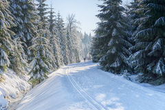 Road in mountains with groomed ski trail at winter. In sunny day. Trees covered with hoarfrost and fresh snow illuminated by the sun. Jizera Mountains, Czech Royalty Free Stock Photography