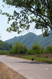 Road and in the mountains Royalty Free Stock Photography
