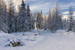 Road in mountains at winter in sunny day. Trees covered with hoarfrost illuminated by the sun. Groomed ski trails for cross-country in Karkonosze, Giant Stock Photos