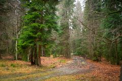 Road with mud and puddles covered with autumn bright leaves in a forest stock photography