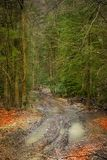 Road with mud and puddles covered with autumn bright leaves in a forest royalty free stock photo