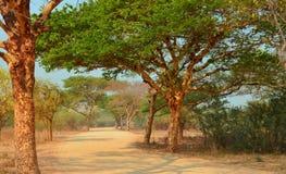 Road in myanmar Birma Bagan. Wild road in myanmar Birma Bagan Royalty Free Stock Photo