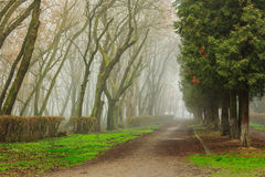 Road In Mysterious a bit creepy and misty Park Royalty Free Stock Photo