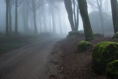Road in a Mysterious dark old forest with fog Royalty Free Stock Photos