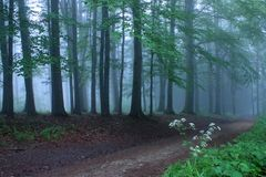 Road in mystic forest. And blue background Royalty Free Stock Photo