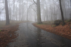 Road in a mystical forest Stock Photos