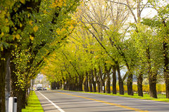 Road in Napa Royalty Free Stock Photography