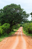 Road in National Park Yala, Sri Lanka Royalty Free Stock Image