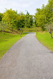 Road in nature. Asphalt winding curve road in nature Stock Photos
