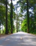 Road. Old rubber tree at chanthaburi royalty free stock image