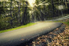 Road in nature Royalty Free Stock Images