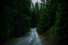 Road, Nature, Path, Forest Royalty Free Stock Image