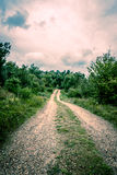 Road in nature. Nature path surrounded by trees and bush Stock Photography