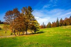 Road near autumn forest on hill Stock Photos