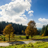 Road near autumn forest on hill Royalty Free Stock Images