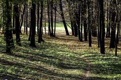 A road near autumn trees in the park. Road near autumn trees in the park in clear sunny day royalty free stock images