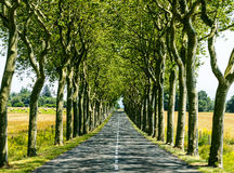 Road near Carcassonne (France) Royalty Free Stock Photos