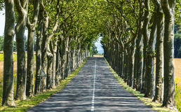 Road near Carcassonne (France) Royalty Free Stock Image