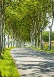 Road near Castres (France) Stock Photography