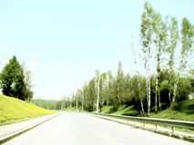 Road near dandelion shore. Road among two shores. One covered with dandelions, other - with birch grove Royalty Free Stock Images