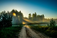 Road near forest at sunrise Royalty Free Stock Photography