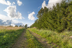 Road near to a field. Stock Photography