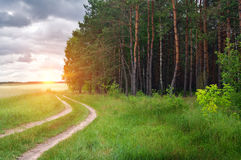 Road near wood royalty free stock photography