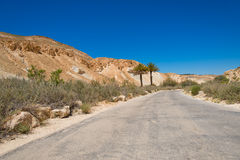 Road in the Negev desert with two palms Stock Photo