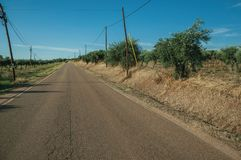 Road next to farm with olive trees. Countryside road on sunset next to farms with verdant orchard of olive trees, near Elvas. A gracious star-shaped fortress royalty free stock photography