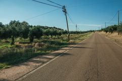 Road next to farm with olive trees. Countryside road on sunset next to farms with verdant orchard of olive trees, near Elvas. A gracious star-shaped fortress stock photos