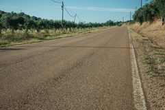 Road next to farm with olive trees. Countryside road on sunset next to farms with verdant orchard of olive trees, near Elvas. A gracious star-shaped fortress stock image