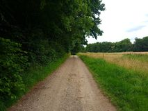 Road next to forest. Beder forest denmark Stock Photography