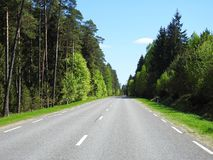 Road and beautiful spring  trees, Lithuania Stock Photography
