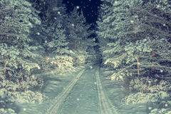 The road in night snowy forest. Stock Photography