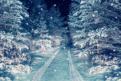 The road in night snowy forest. Royalty Free Stock Image