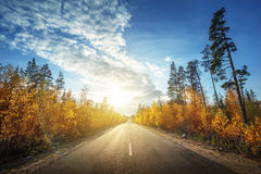 Road in north forest in autumn Stock Image