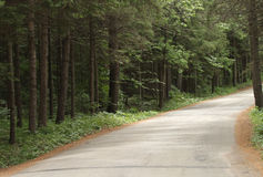 Road through a North Woods Forest Royalty Free Stock Image