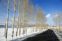 Road of northeast. Northeast of China is very cold ,big snow ,blue sky Royalty Free Stock Photography