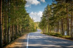 Road through northern forest Royalty Free Stock Photos